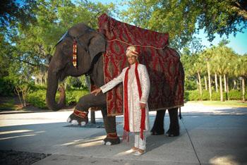 Radha Mahesh Wedding