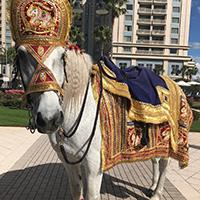Orlando Carriage Rides Inc